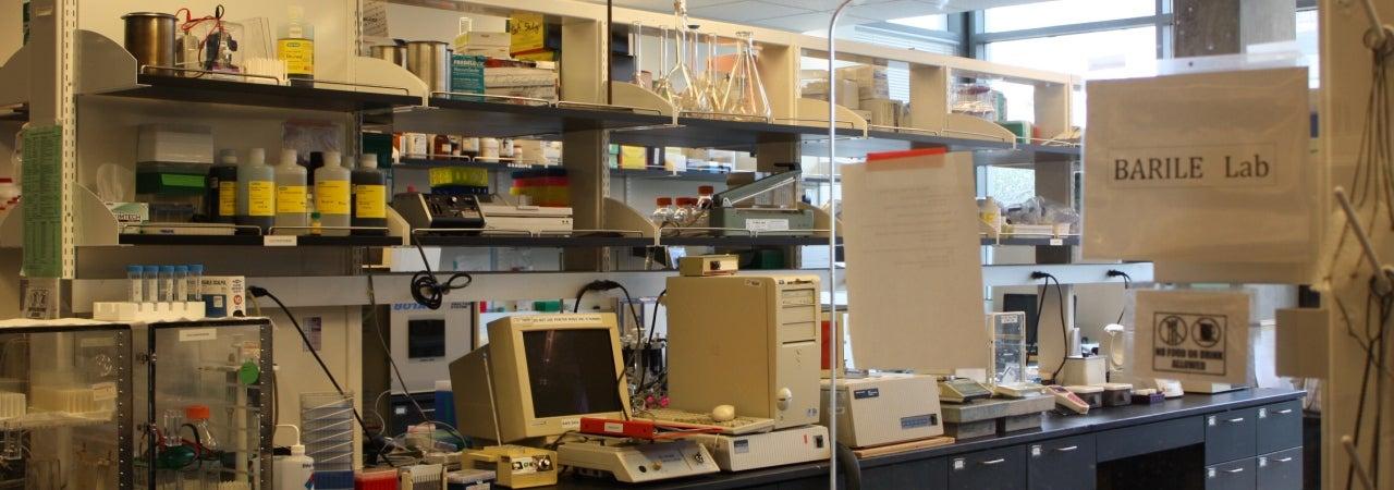 Barile Lab